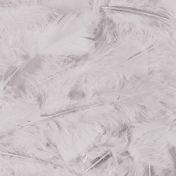 Veren met 100 stuks verpakt - Wit